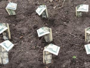 coltivazioni-redditizie