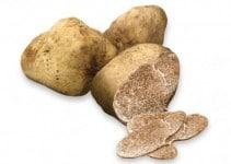come coltivare tartufi