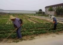 come utilizzare un terreno agricolo