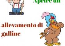 Aprire un allevamento di galline ovaiole ornamentali