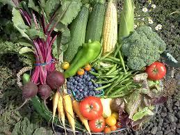 coltivare ortaggi