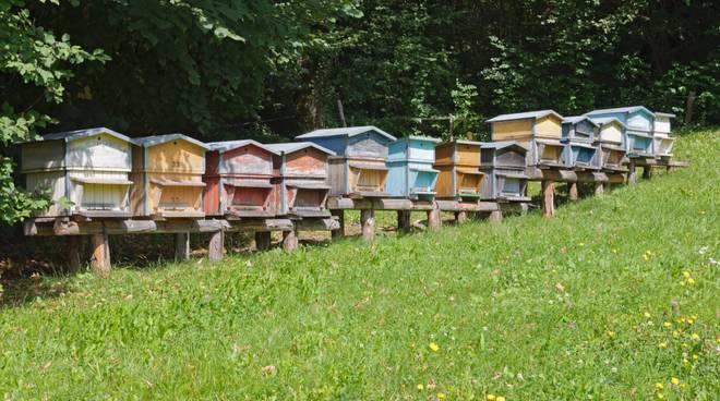 avviare apicoltura