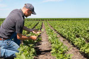 imprenditore agricolo articolo 2135