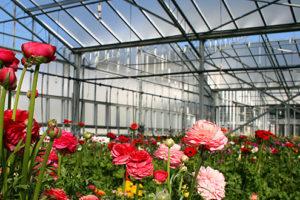 avviare una coltivazione di fiori